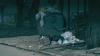 (VIDEO) Chişinăul, în convalescenţă după iarnă. Unele curţi abundă în gunoaie
