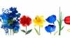 Prima Zi a Primăverii. 20 martie 2015 este sărbătorit de Google