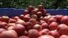 Rusia vrea să interzică merele din Serbia. Bănuieşte că ar fi poloneze