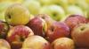 Ministerul Agriculturii cere Rusiei să extindă lista companiilor moldoveneşti exportatoare de mere