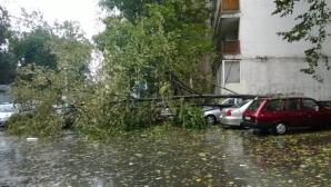 Crengi mari şi grele ţi-au avariat grav automobilul parcat lângă bloc. Cum poţi recupera paguba