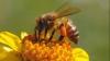 #LifeStyle. Primul lucru pe care TREBUIE SĂ-L FACI atunci când te înțeapă o albină