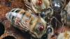 PARAZIŢII atacă albinile din Moldova. Prisăcarii fac prognoze sumbre