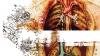 Cu ajutorul tehnologiei folosite în Google Maps corpul uman a fost cartografiat la nivel celular