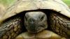 Un şofer, condamnat să plătească o amendă usturătoare pentru că ar fi călcat cu maşina o broască ţestoasă