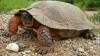 TURBO broasca! Reacţia unei ţestoase când a văzut un bărbat cu o cameră video