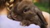 SCANDAL în Danemarca după ce un prezentator radio a tăiat un iepure în timpul emisiunii