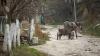 Nenorocire la Constanţa. Un copil de doi ani a murit după ce a căzut din căruţă