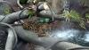 ULUITOR! Comportamentul acestui jaguar a uimit vizitatorii de la o grădină zoologică (VIDEO)