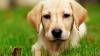#LIKEPUBLIKA! Este cel mai simpatic câine care vorbeşte cu stăpânii săi (VIDEO VIRAL)