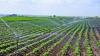 """""""Producţia va creşte"""". Programul de finanţare pentru sisteme de irigare, lăudat de fermieri (VIDEO)"""