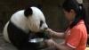 Cel mai bătrân panda şi-a celebrat ziua de naştere. Ce cadou a primit