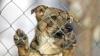 STRIGĂTOR LA CER! Locuitorii din Leova, TERORIZAŢI de câini vagabonzi (VIDEO)
