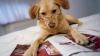 Surprize drăguțe și nu prea. Ce poți păți dacă ai animale de companie în casă (VIDEO)