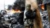 Război în Ucraina: MAI MULȚI MORȚI în estul țării, iar schimburile de focuri nu contenesc