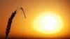 Aproape 50 de grade Celsius. Vremea toridă continuă să facă sute de victime în India