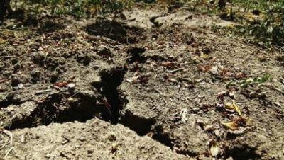 Seceta şi îngheţurile au compromis culturile agricole. Ce spun agricultorii