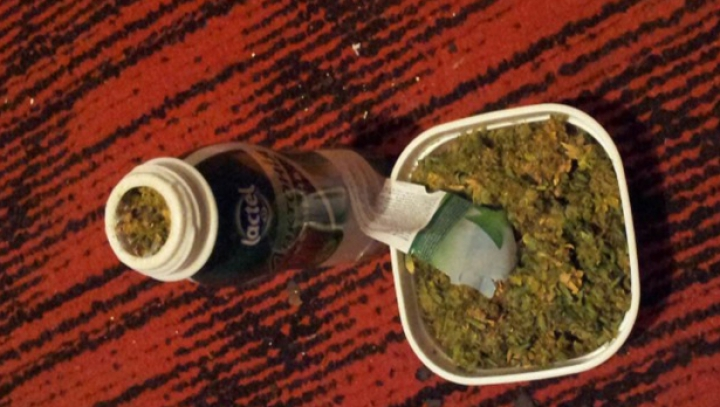Marijuana în ghivece. Poliţia a desfiinţat o grupare care vindea droguri (FOTO)