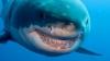 Senzații TARI sub apă! Tu ce vei simți dacă vei sta lângă un așa URIAȘ marin? (VIDEO)