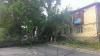 Trei străzi din Capitală, ÎN BEZNĂ. Doi plopi s-au prăbuşit în sectorul Botanica