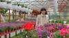 """""""Mi-am împlinit visul"""". O femeie din Criuleni şi-a pus pe roate o afacere de succes, cu miros de flori"""