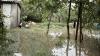 NO COMMENT! Gospodării inundate şi păsări domestice ucise în urma PLOILOR ABUNDENTE (VIDEO)