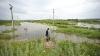 Pagube DE PROPORŢII. Ploaia a distrus hectare de culturi agricole