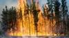 Incendiu DEVASTATOR într-un stat american. Focul s-a extins pe zeci de hectare