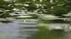 Toate lacurile din Moldova riscă să SECE. Care sunt principalele cauze