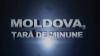 """Cine trage sforile în afacerile cu Paulownia și în interesul cui? Aflați duminică, la """"Moldova, țară de minune"""""""