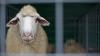 MII DE EURO pentru modernizarea Centrului republican de diagnostică veterinară. Cine oferă banii