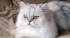 Comportament SADIC! Doi tineri au băgat o pisică în maşina de spălat (VIDEO)