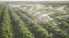 PREMIERĂ în Moldova! Dispozitivele care îi vor ajuta pe agricultori să nu mai facă risipă de apă