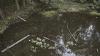"""Miros insuportabil şi apă verde! Lacurile din """"Valea Trandafirilor"""" sunt în prag de CATASTROFĂ ecologică"""