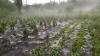 Cifra prejudiciilor după ploaia cu grindină din sudul țării se ridică la ordinul MILIOANELOR
