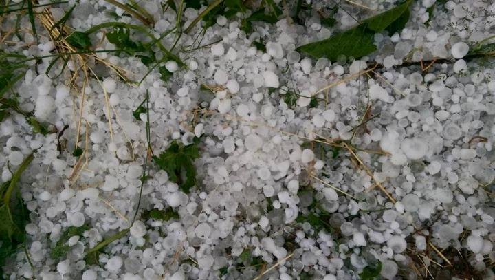 Neputincioși în fața NATURII! O ploaie cu grindină a pus roada la pământ (FOTO)