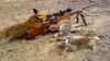 Vânatul iepurilor de câmp ar putea fi INTERZIS ÎN MOLDOVA. Ministerul Mediului anunţă cauza