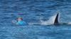 MOMENTE DE GROAZĂ transmise LIVE. Un surfer, atacat de un rechin în timpul unei competiţii (VIDEO)
