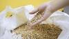 Seceta VA SCUMPI cerealele. Recolta grânelor de pe câmpuri va fi mai mică decât în 2014