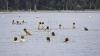 ATENȚIE! Scăldatul în lacurile din Capitală este PERICULOS. Avertismentul specialiştilor