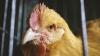 DESCOPERIRE PERICULOASĂ! Ce a găsit un bărbat în groapa scurmată de o găină în curte (FOTO)