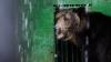 Mănâncă îngheţată şi fac duş. FOTOGRAFII IMPRESIONANTE cu animalele de la Zoo din Capitală