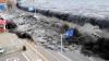Consecințele dezastrului de la Fukushima. Mutanții care au uimit întreaga lume (FOTO)