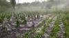 Grindina a provocat distrugeri enorme în satul Cotul Morii din Hânceşti
