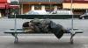 VIRAL! Trecătorii au rămas ULUIȚI de ce face acest OM AL STRĂZII (VIDEO)
