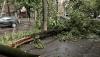 Haos! Un arbore a căzut peste o staţie din sectorul Buiucani al Capitalei