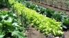 SECRETELE grădinăritului ecologic. Ce încearcă să promoveze un grup de iniţiativă