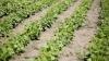 Subvenții cu viteza melcului! Agricultorii vor semna, ÎN SFÂRȘIT, contractele