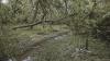 Moarte învăluită în mister. O femeie din Capitală a fost găsită fără suflare sub un copac (VIDEO)