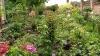 Pasiunea, mai presus de orice! O femeie din Ghidighici şi-a transformat grădina într-un colţ de rai